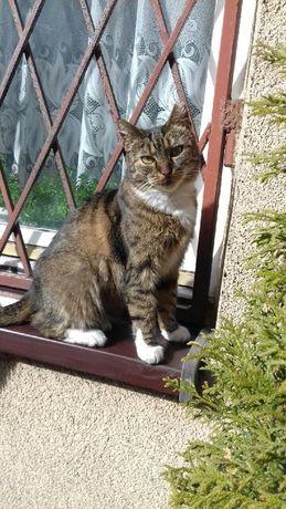 Zaginął kot Sosnowiec