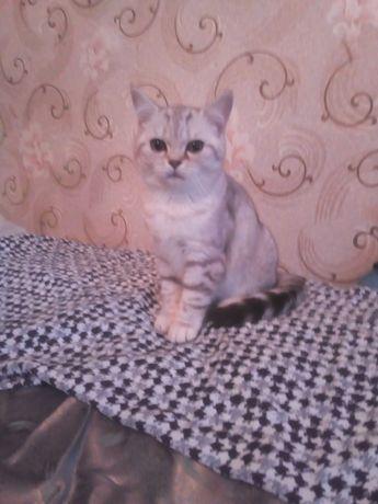 Если в доме пусто -ты купи котенка\Возможен обмен .ваши предложения\