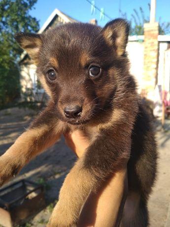 Подарю красивых щенят