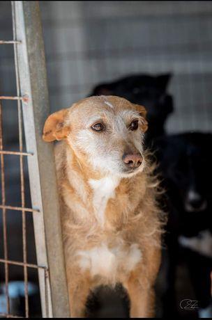 Anocas - cachorra de porte médio para adoção