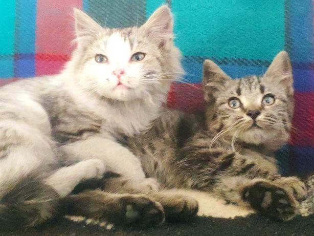 Kotki szukają ciepłego domu
