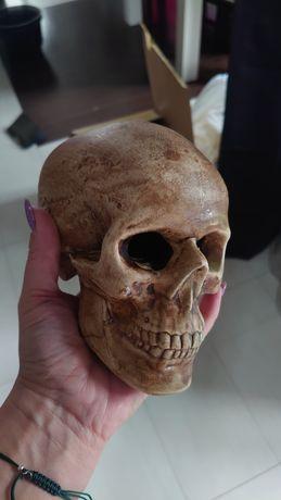 Ozdoba do akwarium czaszka ceramiczna