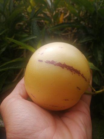 Pêra-melão de vários tamanhos
