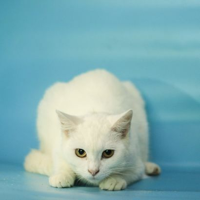 Трогательная Зефирка ищет семью котенок котята кошеня кот кошка котеня