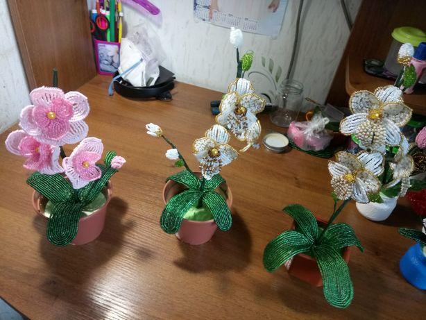 Неувядающая орхидея