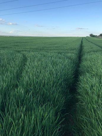 Przejmę w dzierżawę ziemię rolną