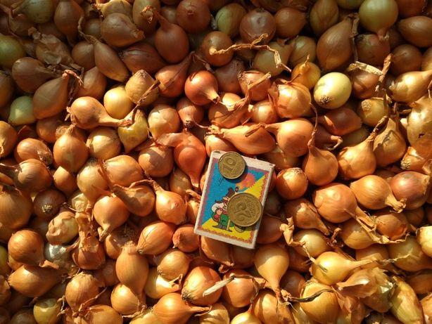 Продам лук севок собственного производства урожай 2020 года