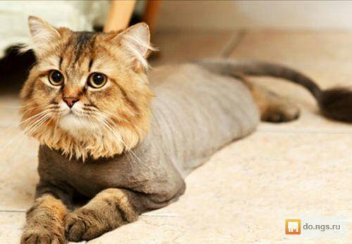 Стрижка котов от 200 грн