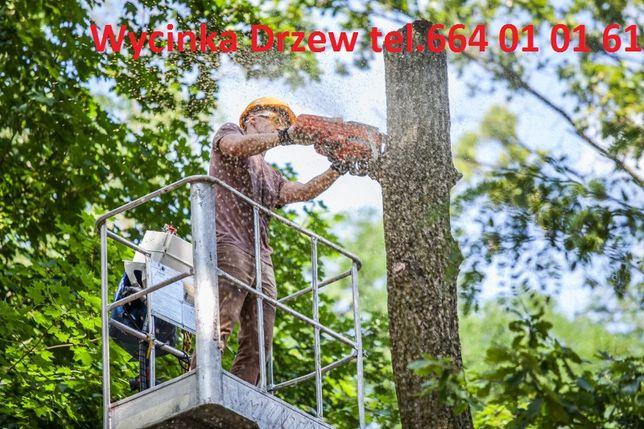 Wycinka drzew, wycinka drzewa, rębak do gałęzi, frez do pni