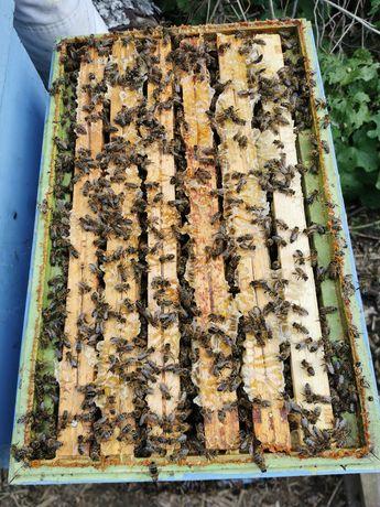 Odkłady pszczele na ramce wielkopolskiej NATURA 2000