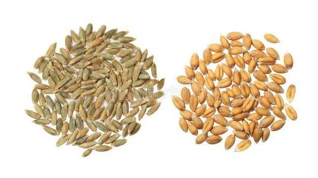 Пшеница, ячмень, семочка - кондитерка продам.