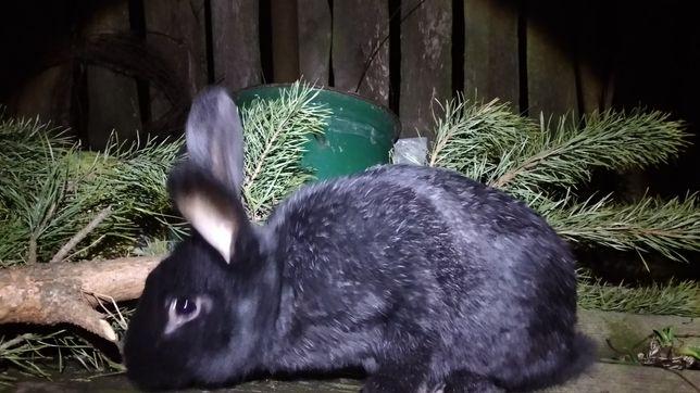 Кролики,кролі.