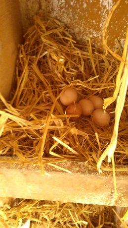 Świeże jaja wiejskie