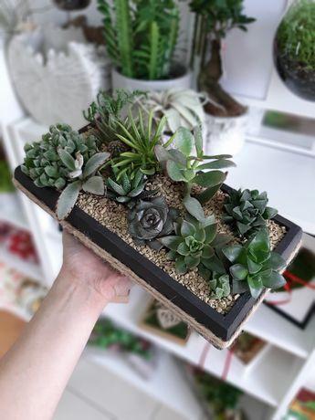 Kaktusiarka sukulenty pustynia pustyni dekoracja