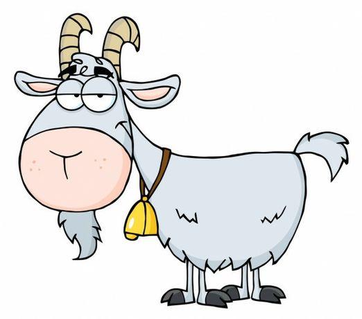 Козье молоко от элитных пород коз в  Терновском районе.