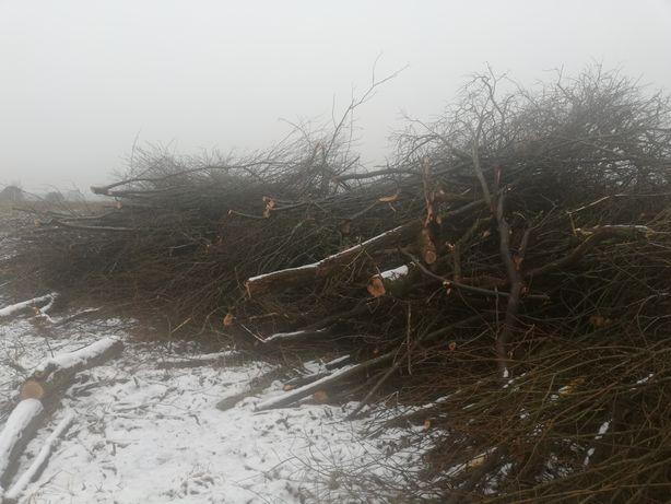 Galezie biomasa sprzedam