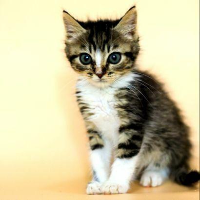 Котенок Кэп ищет своего человека котенок котята кошеня кот кошка
