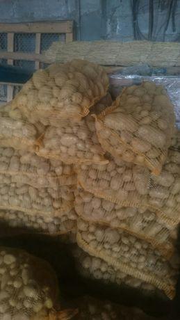 Ziemniaki odpadowe, paszowe