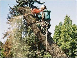 Wycinka drzew,krzewów,przycinanie.TANIO!!!