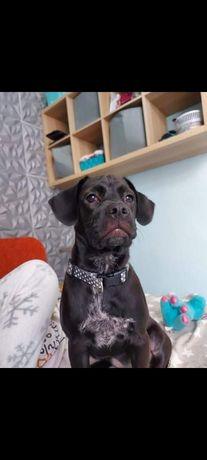 Pies suczka adopcja