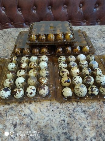 Перепелині яйця домашні