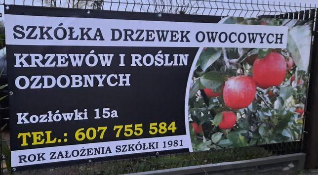 Drzewka i krzewy owocowe - Szkółka Producent