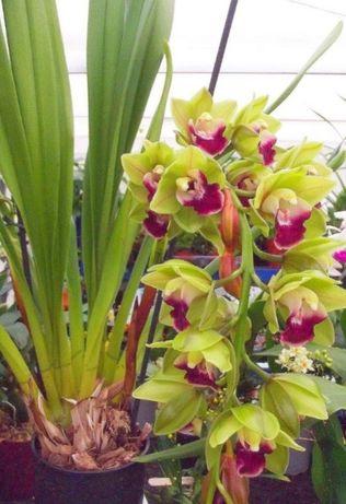 Orquídeas de várias cores