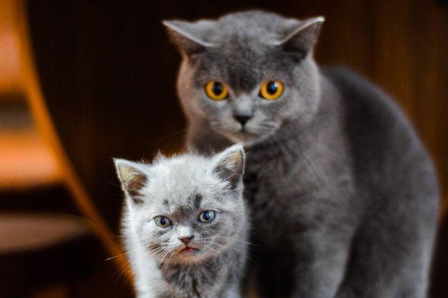 Прикольні котята