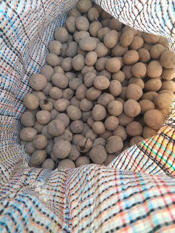 Ziemniaki drobne