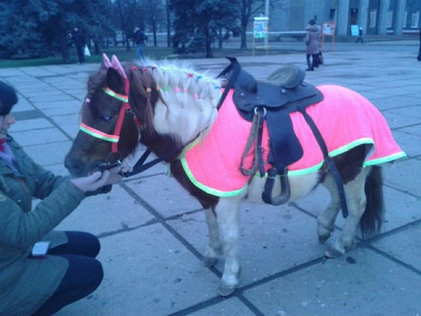 Кобыла пони с жеребёнком
