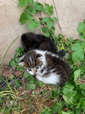 Pilnie, potrzebują pomocy! Kociaczki szukają tymczasu wraz z mamusią