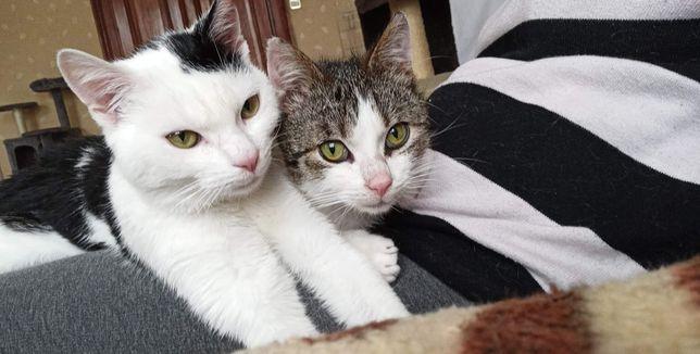 Oddam kota / kot do adopcji