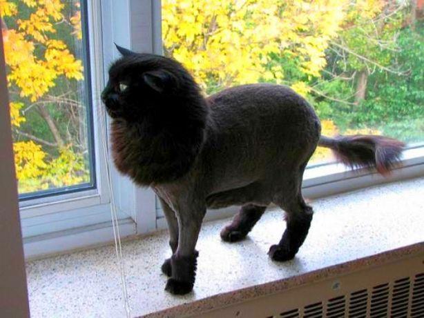 Грумінг, перукар для котів та собак!