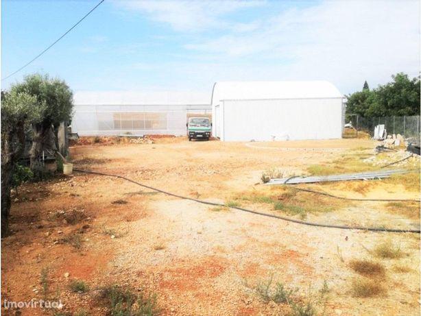 Terreno com estufas, completamente vedado, Faro