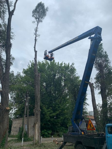 Спил дерева, обрезка дерева, удаление дерева.