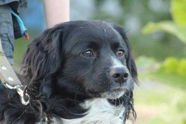 Спасти Гришку, черно-белая собака, собачка, пес, песик, 1 годик