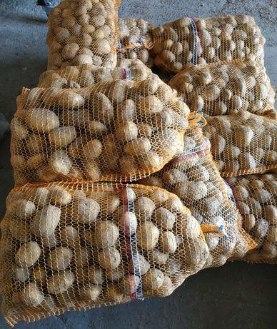 Ziemniaki Denar (Ilości hurtowe)