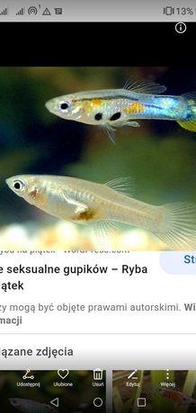 Rybki akwariowee