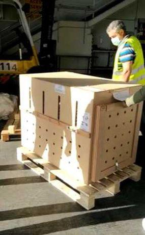 Caixa de Transporte de Cachorro em Madeira