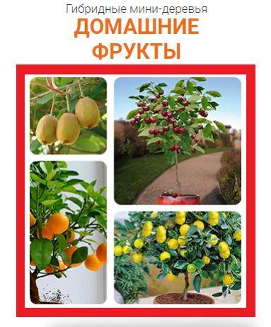 Скидка -50% Гибридные мини деревья! Семена привитых деревьев! Экодар
