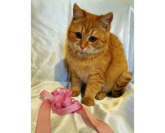 Кошечка Злата, 6 мес, стерилизацию оплатим