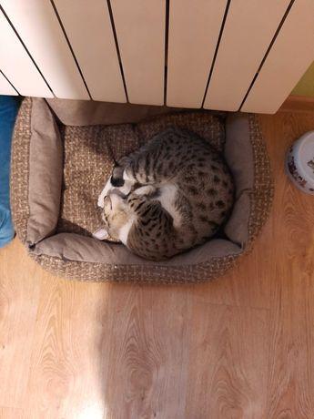 !!! Zaginął kot pilne !!!