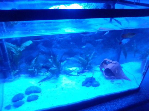 Vendo aquário de 60 litros