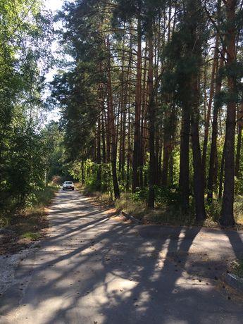 3500 за сотку!  25 сот в лесу Гнедин Озеряни делится на 2 участка