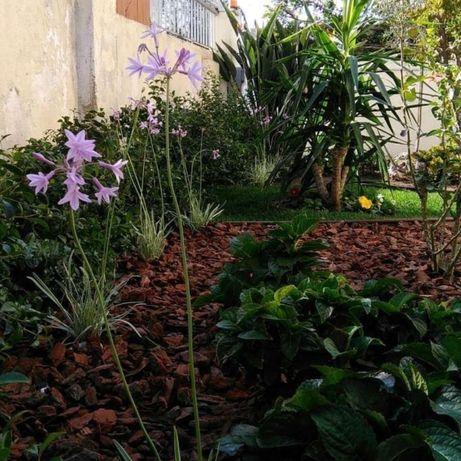 Manutenção Decoração de Jardim & limpeza de Terrenos