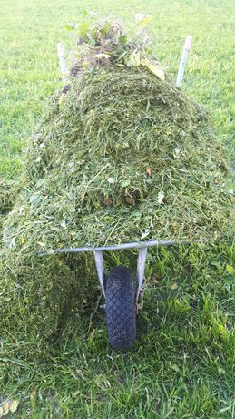 Trawa skoszona zmielona za darmo
