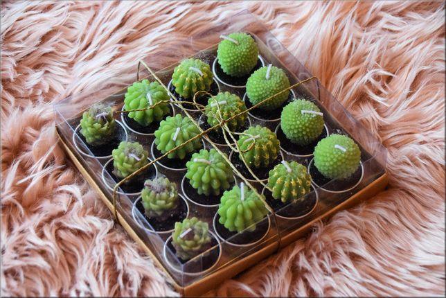 Świeczki tilajty kaktusy , 16 sztuk