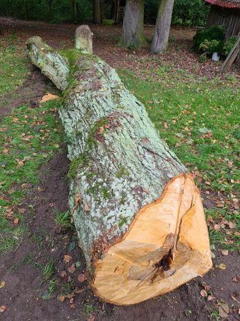 Drewno Lipowe z naprawde starego drzewa