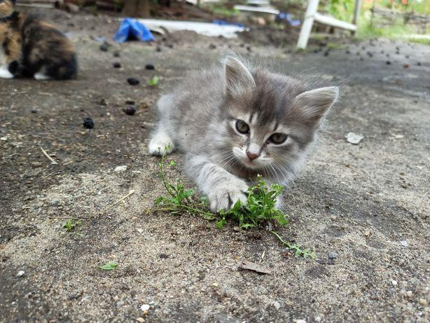 Подарю домашнего котенка.