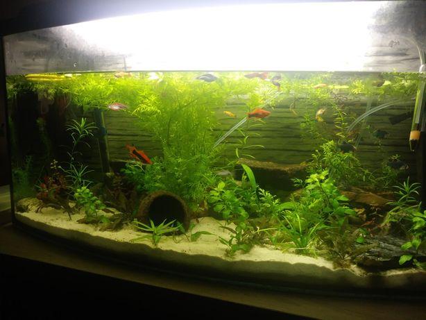 Roslinki akwariowe